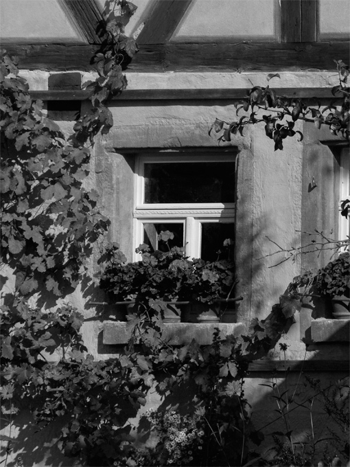 black and white photo of old-style cottage window surrounded by garden plants