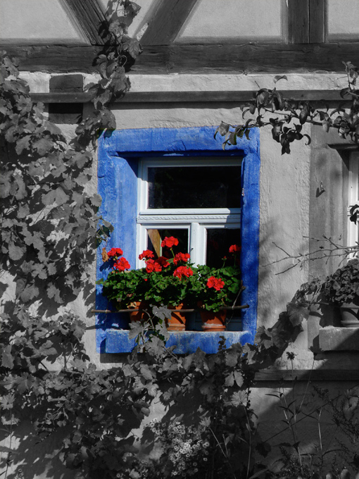 same black and white photo with color added to just window frame and window plants