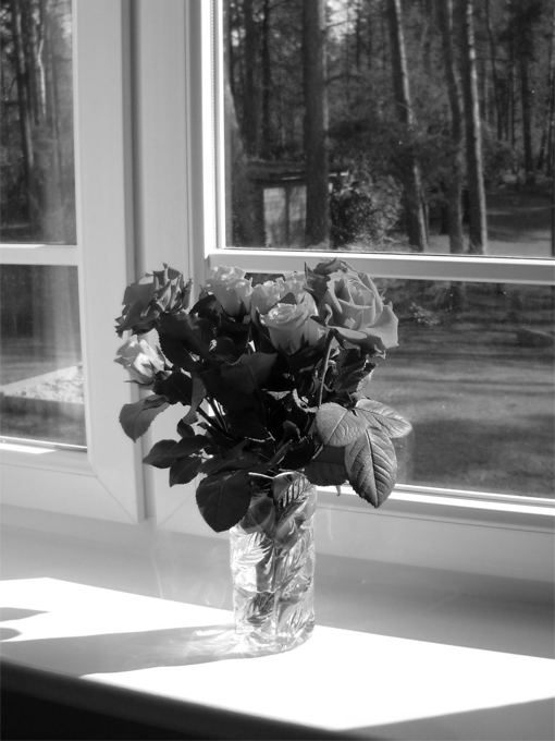 black and white photo of roses in vase on window sill